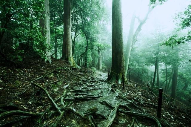 森林の根っこ